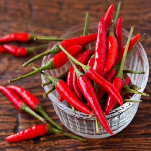 Hot Pepper - Tabasco - 10 seeds